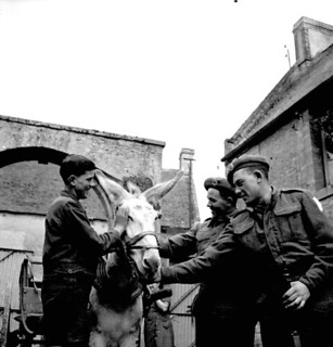 Two soldiers of the 11th Field Company Royal Engineers talk with a French boy with a donkey, Creully, France / Deux soldats de la 11e Compagnie de campagne des Royal Engineers bavardant avec un jeune Français accompagné d'un âne, Creully (France)