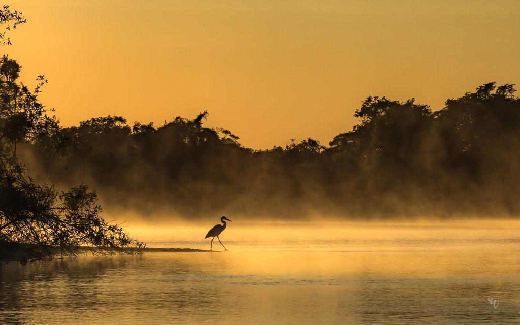 misty morning in Pantanal