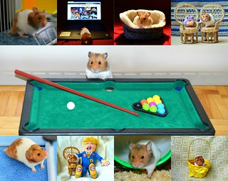 'Oreo' The Hamster .... A Life In Pictures