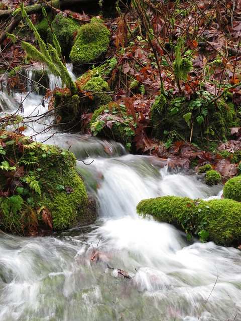 the springs spring forth
