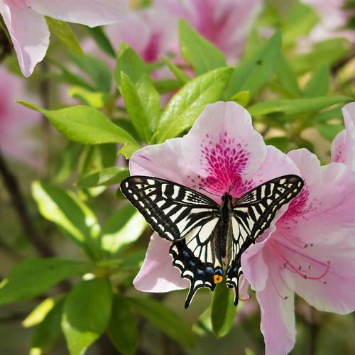 butterfly 09 | by mathias-erhart