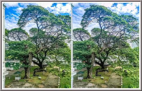 colombo srilanka park trees 3d stereoscopy stereophotografy