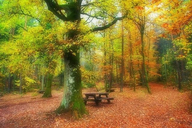 Forêt du Haut-Koenigsbourg