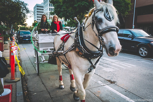 181201_HORSE_CARRIAGE_FRIOLO_003 | by inhousephoto