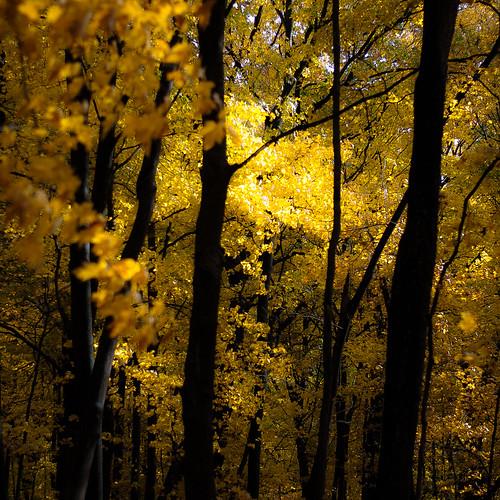d5000 nikon ryersonwoodsforestpreserve autumn forest landscape leaves natural noahbw quiet square still stillness trees woods