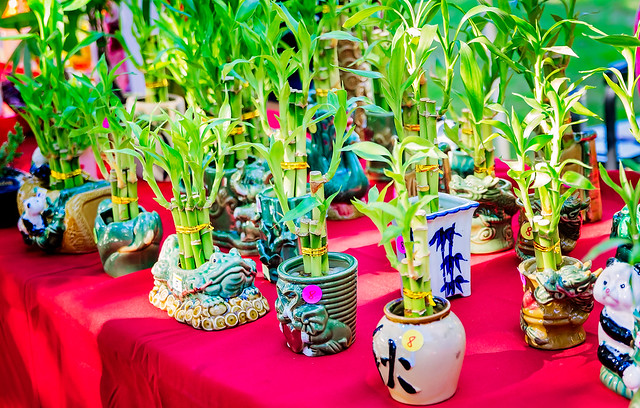 Bamboo plants are displayed at Market in the Park in Mobile Alabama Cathedral Square