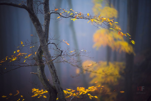 Autumnal Beech Forest | by stephan_amm