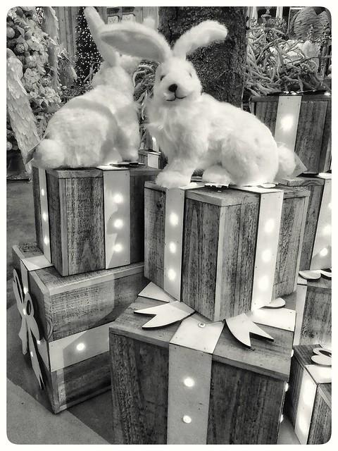 The four presents #bunnies #konijntjes #christmasdecoration #kerstdecoratie #christmasshow #kerstshow #blackandwhite #blacknwhite #bnw #bw #bws #noir #monochrome #zwartwit #bnwphotography #colorless #lovephotography #photographer #photography #fotograaf #