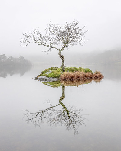 lakedistrict rydalwater tree lonetree rydaltree cumbria water