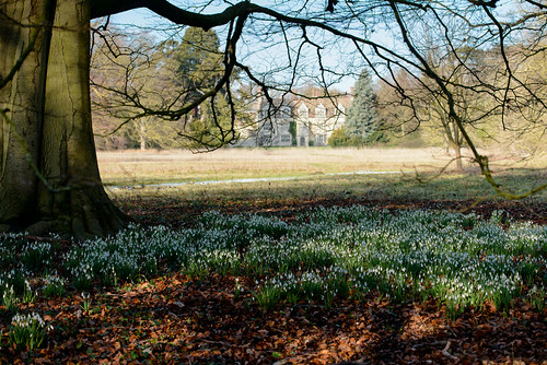 snowdrops_angelsey-1253 | by Barry Cant