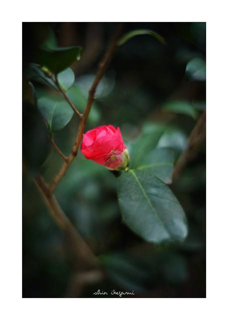 2019/2/15 - 1/18 photo by shin ikegami. - SONY ILCE‑7M2 / Voigtlander NOKTON CLASSIC 40mm f1.4 SC VM