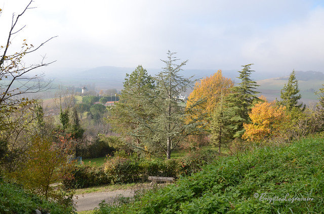 Brume et couleurs d'automne