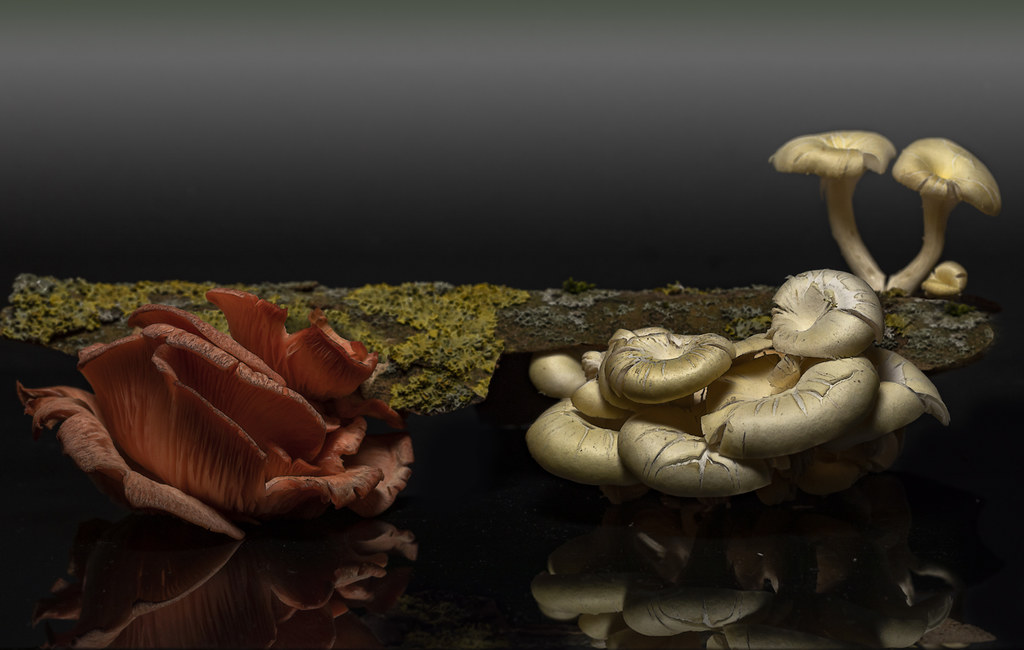 Fungi_1661-2