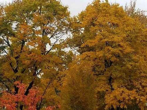 autumnfoliage november2018 worcester massachusetts newengland