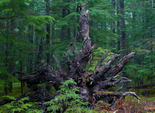 Rising in Gifford Pinchot National Forest