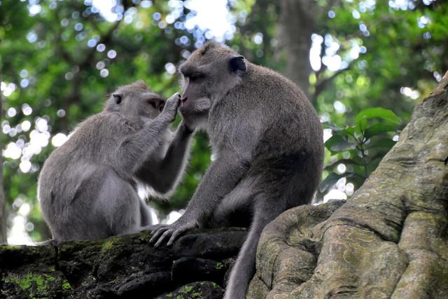 Monkey Forest, Bali.
