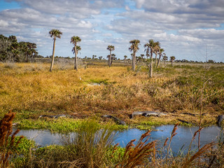 Kissimmee Prairie-024 | by RandomConnections