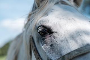Horse | by lskornog