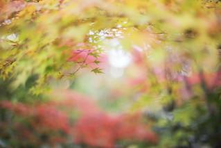 Untitled | by けんたま/KENTAMA