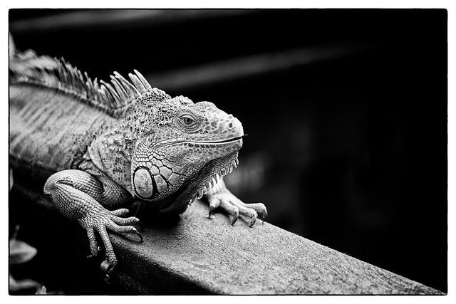 Kleiner Drache / Little Dragon