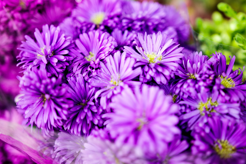 Small Bouquet Of Purple Flowers Marco Verch Is A Profess