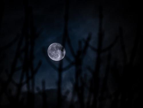 Hail Luna | by Cagey75