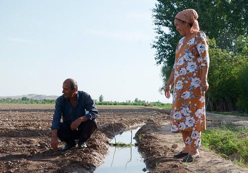 Working on Dehkan farms in rural Tajikistan as part of water use associations (WUAs)