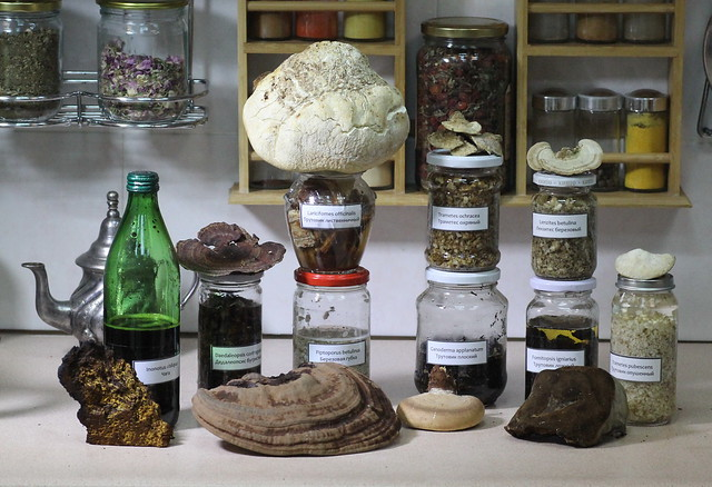 Medicinal tinctures made from 9 species of lignicolous fungi