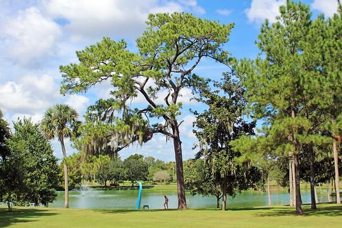 landscape scenery park trees pine palmtree lake ocala florida unitedstates