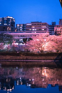 O River Sakura - Osaka, Japan | by inefekt69