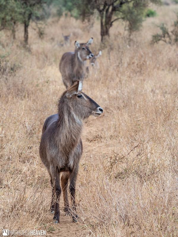 Kenya - 0226