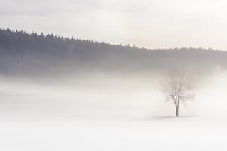 Suspendu dans le temps... | by Pose Nature