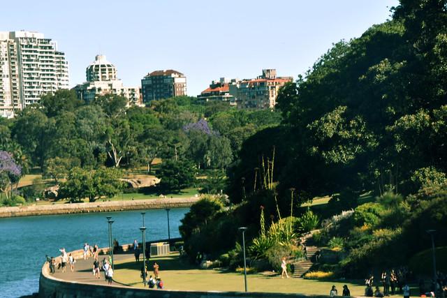 Royal Botanical Garden, Sydney.