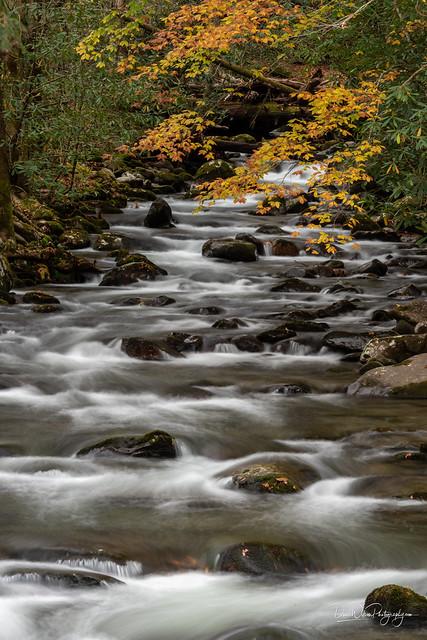 Porters Creek Cascade