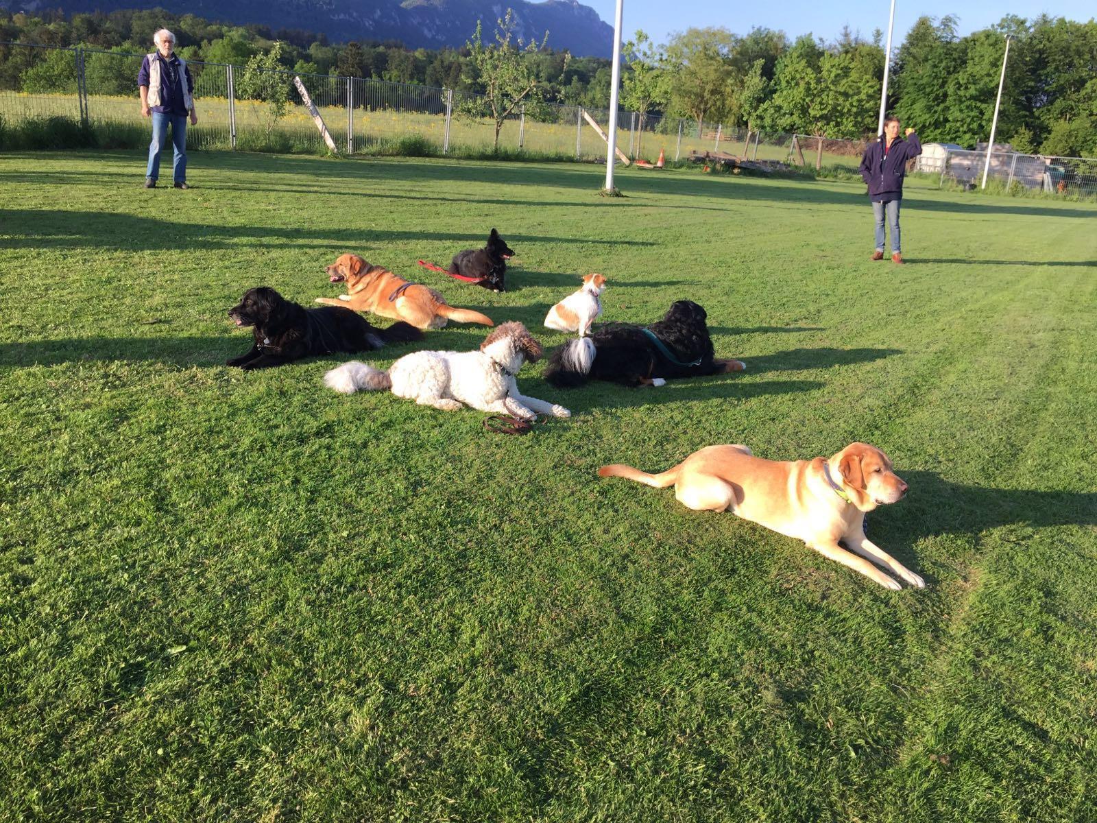 Impressionen Familienhundetraining 2016