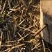 02_pinocchio ferito dall'alto_bd