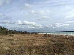 Lake Clifton - Marshy Shoreline