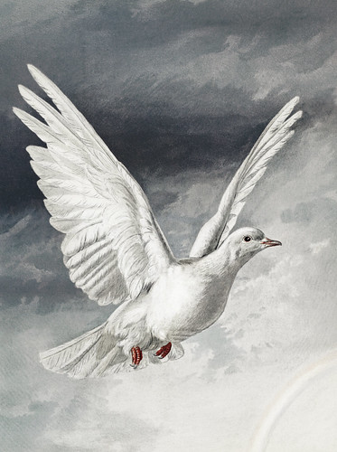 Flying dove on a Christmas card | by Free Public Domain Illustrations by rawpixel