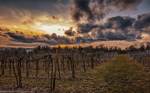 shower snow vineyard hohenheim sunset sky clouds steppenwolf33 horizon