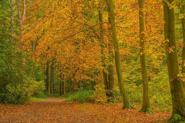 Autumn At It's Finest