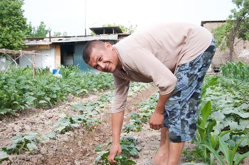 Farmer managing his kitchen garden in rural Tajikistan.
