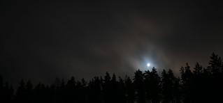 Moon over tree tops | by felix200SX