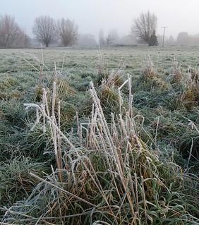 Frosty meadows