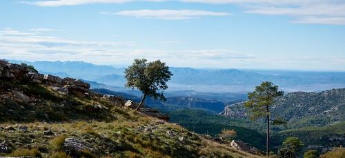 árbol tree catalunya vistas view landscape muntanya llaberia la miranda ribera debre mirador muntanyes serralada els ports ebre tarragona costa daurada