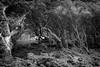 Ancient woodland by Rense Haveman