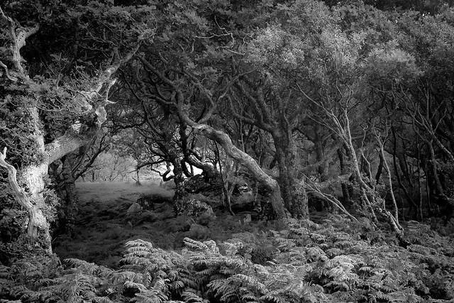 Ancient woodland