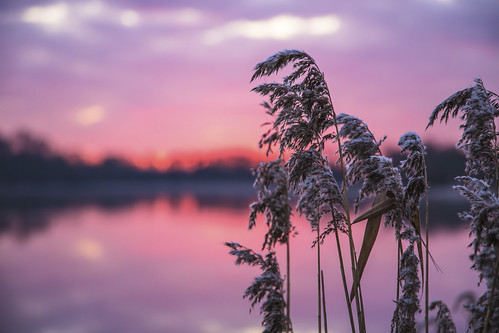 canon6d bokeh landscape reeds outdoors nature water lake reflection uk cambridgeshire sunrise dawn