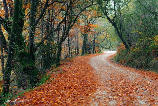 Fairytail's path
