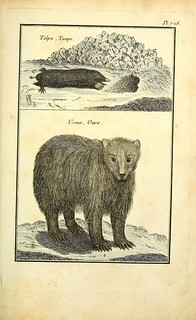 n180_w1150 | by BioDivLibrary
