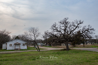 Tree and church | by niseag03